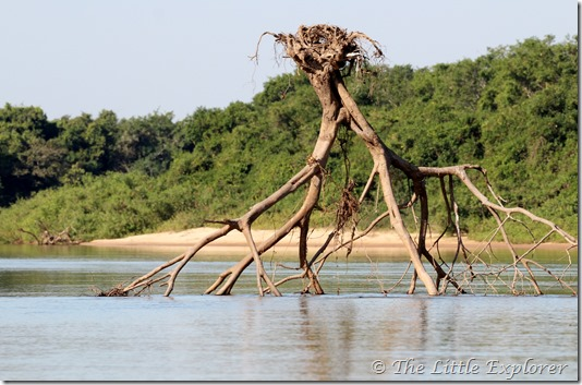 Nest in the river